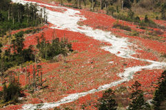 Красный каменный поток Стоковые Изображения
