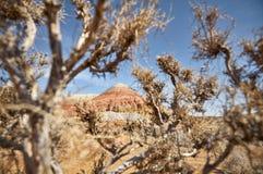 Красный каньон в пустыне стоковая фотография rf
