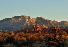 Красный каньон утеса Стоковые Изображения