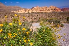 Красный каньон NV утеса Стоковые Фото