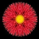 Красный калейдоскоп мандалы цветка изолированный на черноте Стоковое фото RF