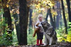 Красный клобук катания с волком в древесинах сказки Детская игра с лайкой и плюшевым медвежонком на свежем воздухе внешнем балери Стоковая Фотография