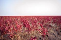 Красный ковер Dongying Стоковое фото RF