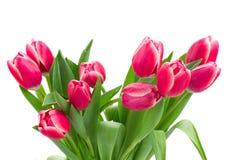 Красный   конец букета тюльпанов вверх Стоковые Изображения