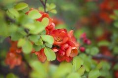 Красный конец-вверх цветка Стоковое Изображение RF