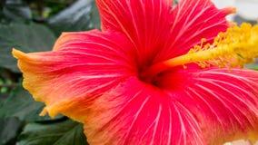 Красный конец цветка вверх Стоковая Фотография