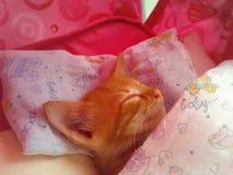 Красный котенок спать Стоковое Изображение RF