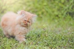 Красный котенок Стоковые Фото