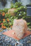 Красный котенок Стоковая Фотография