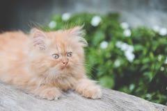 Красный котенок Стоковые Изображения