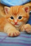 Красный котенок стоковая фотография rf