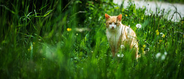 Красный кот в парке города Стоковые Изображения
