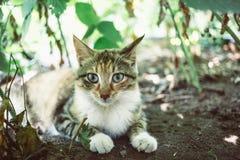 Красный кот в саде Стоковые Изображения RF
