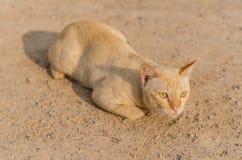 Красный кот лежа на почве Селективный фокус Стоковое Изображение RF
