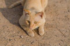 Красный кот лежа на почве Стоковые Изображения