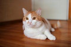 Красный кот лежа на поле Стоковое Фото