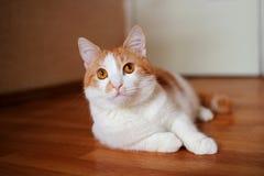 Красный кот лежа на поле Стоковое Изображение RF