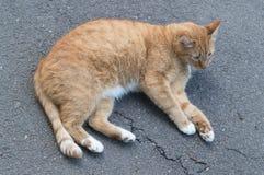 Красный кот лежа на том основании Стоковое Фото