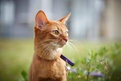 Красный кот играя снаружи Стоковое Изображение