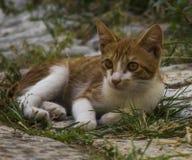 Красный кот котенка стоковое изображение