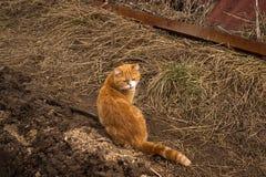 Красный кот на улице стоковая фотография