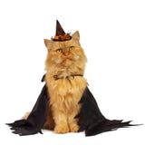 Красный кот на хеллоуине Стоковые Изображения RF