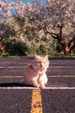 Красный кот Неудовлетворенный любимчик Спортивная площадка стоковые изображения rf