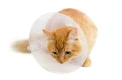 Красный кот, нося елизаветинский воротник на светлой предпосылке Стоковое Фото