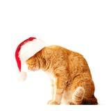 Красный кот нося шляпу Санты Стоковая Фотография RF