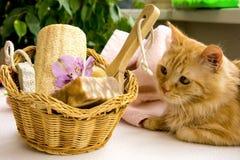 Красный кот около корзины для ванной комнаты, пемзы, лейтенанта, alstroemeria Стоковые Фотографии RF