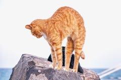 Красный кот протягивает на камне на пляже стоковое изображение rf