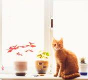 Красный кот сидя на окне Стоковая Фотография RF