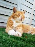 Красный кот сидя на траве стоковые фотографии rf