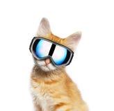 Красный кот с изумлённым взглядом лыжи Стоковые Фото