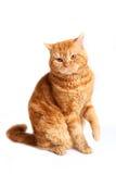 Красный кот Стоковые Фото