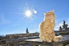 Красный кот Стоковое фото RF
