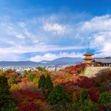 красный красивый осени Momiji красочный, зеленый и желтый клен Стоковые Фото