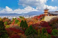 красный красивый осени Momiji красочный, зеленый и желтый клен Стоковое фото RF