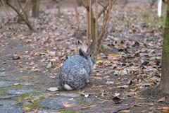 Красный кролик зайчика сидит в заднем дворе в траве Стоковые Изображения RF