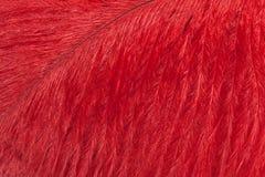 Красный крупный план пера страуса Макрос Стоковая Фотография