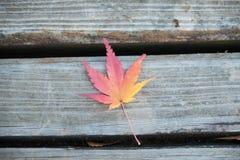 Красный кленовый лист на стенде Стоковая Фотография RF