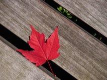 Красный кленовый лист Стоковое фото RF