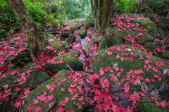 Красный клен на камне пола Стоковое Изображение