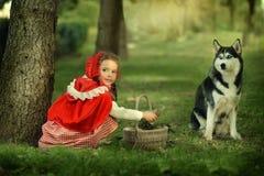 Красный клобук катания и серый волк в лесе Стоковое фото RF