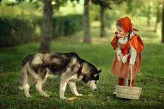 Красный клобук катания и серый волк в лесе Стоковая Фотография RF