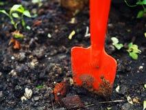 Красный лопаткоулавливатель выкапывая в влажной черной почве Стоковое фото RF