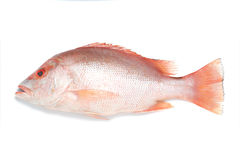 красный люциан рыб Стоковые Фото