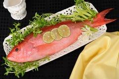 красный люциан рыб стоковая фотография rf