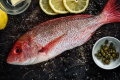Красный люциан с ингридиентами рецепта Стоковые Изображения RF