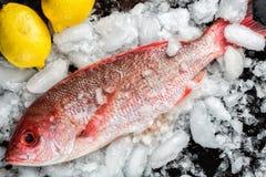 Красный люциан с лимонами на льде Стоковые Фото